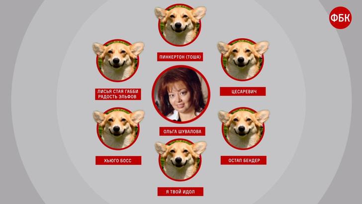 Фото №1 - Лучшие шутки о собаках жены вице-премьера, которые летают частным самолетом