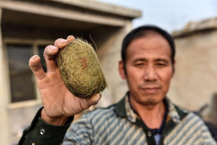 Фото №1 - Селянин вспорол брюхо свинье и нашел там предмет, который принесет ему миллионы!