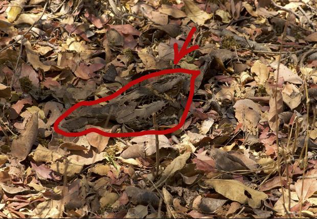 Фото №2 - Оптическая иллюзия: видишь птичку на фото? А она есть!