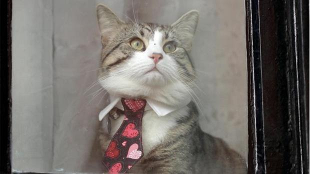 Фото №3 - Джулиану Ассанжу строго наказали кормить кота и мыть после себя ванную
