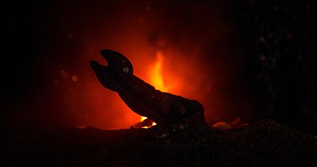 Фото №4 - Эти забавные рептилоиды: как будут выглядеть пришельцы, по мнению ученых