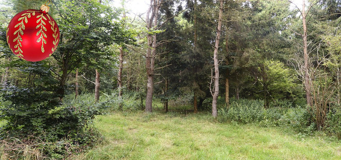 Найди 6 солдат, притаившихся в густом лесу!