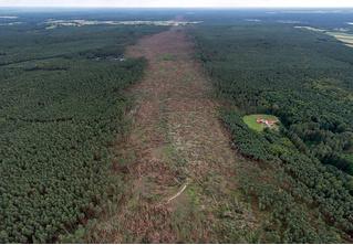 История одной фотографии: прореха, которую смерч оставил после себя в лесу
