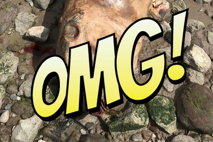 Фото №1 - Жуткий монстр с клыками и шипами найден на берегу реки в Британии! Ученые и те в недоумении