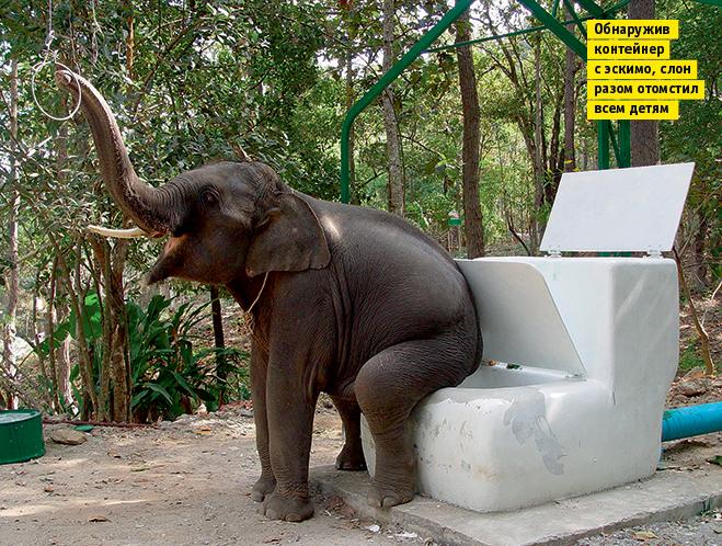 Фото №8 - Слонопотамия. 13 фотоисторий из жизни слонов