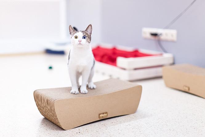 Фото №1 - Коты онлайн без регистрации и смс: прямая трансляция из кошачьего приюта