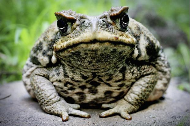 Фото №6 - 20 лучших фото жаб всех времен и народов!