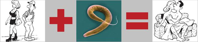 Аутооргии червей C. elegans