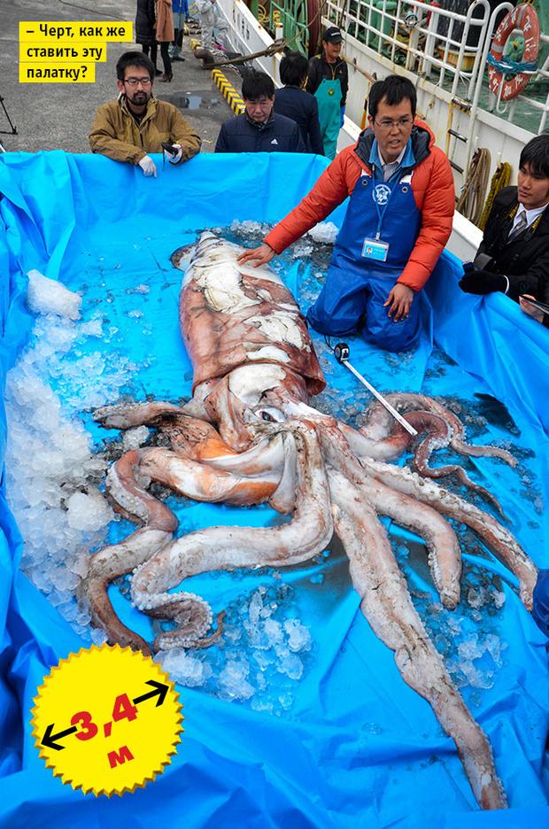 Фото №8 - Кто сказал «Вау!»: шокирующе огромные животные-переростки