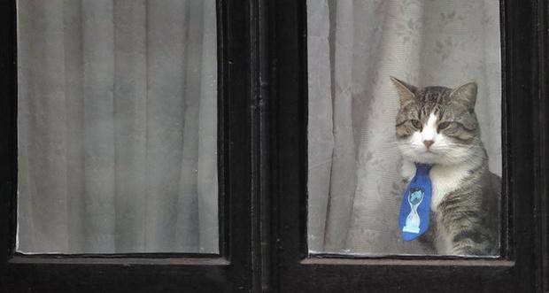 Фото №2 - Джулиану Ассанжу строго наказали кормить кота и мыть после себя ванную