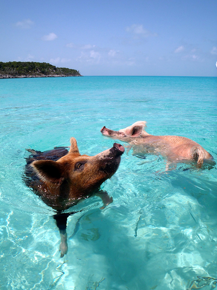 Big Major Cay, Блэк Поинт, Багамские острова