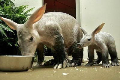 Фото №9 - 10 самых необычных животных