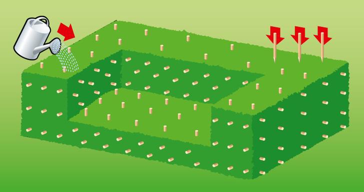 Фото №5 - Как сделать на даче травяной диван