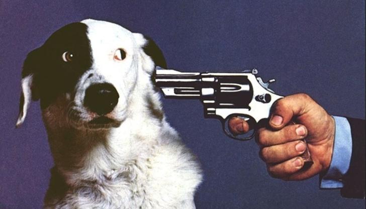Фото №1 - Как подраться с собакой и победить