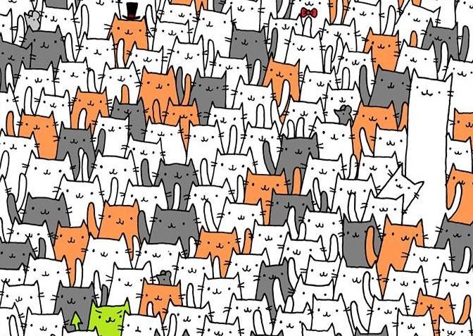 Фото №1 - Головоломка: найди кролика в гуще котов