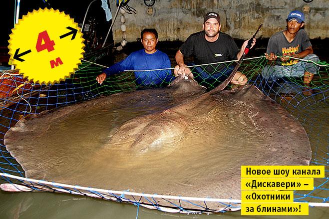 Фото №11 - Кто сказал «Вау!»: шокирующе огромные животные-переростки