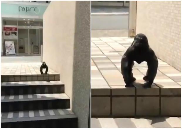 Фото №1 - Орнитолог объяснила, что происходит со странной вороной на вирусном видео