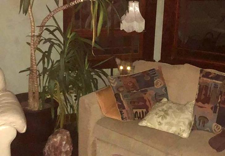 Фото №1 - Девушка обнаружила у себя дома огромную пуму — и не растерялась! Зверское ВИДЕО