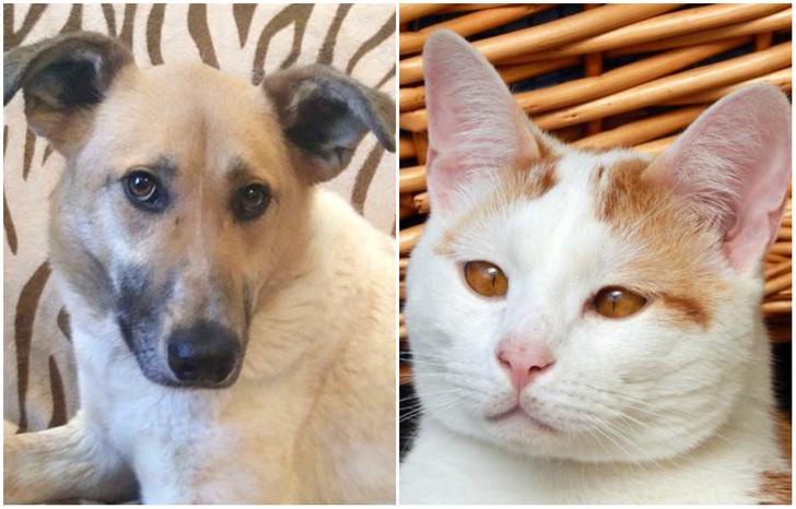 Фото №1 - Котопёс недели: возьми из приюта кота Дюшеса или собаку Розу