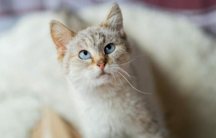 Фото №3 - Котопёс недели: возьми из приюта собаку Варю или кошку Полину