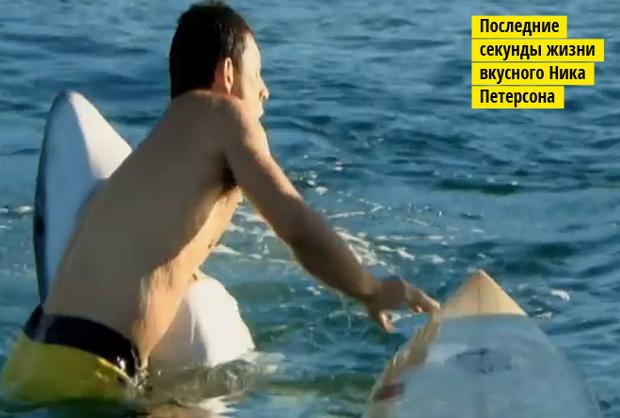 Фото №5 - Рыба-Гитлер. Исчерпывающий материал об акулах, после которого ты больше никогда не поедешь на море или океан