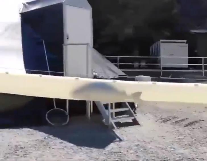 Фото №1 - Видео скоростного тоннеля для рыбы стало вирусным