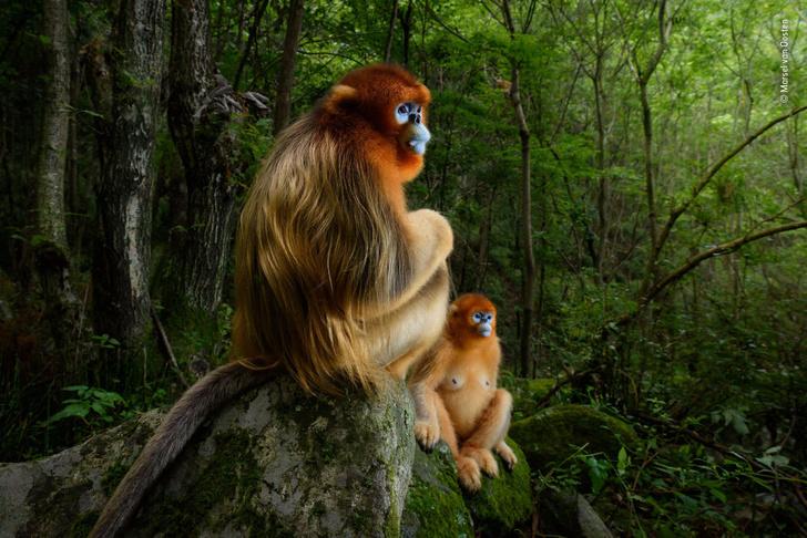 Фото №1 - Финалисты и победители фотоконкурса Wildlife Photographer of the Year 2018 (галерея)