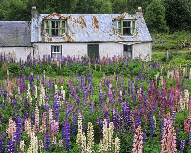 Фото №2 - 10 растений для ленивых садоводов