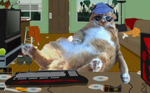 Фото №7 - Балдеющий кот — новый король фотожаб!