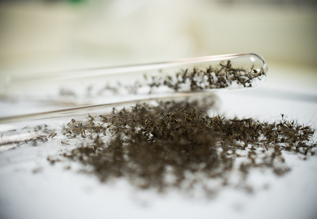 Фото №2 - 240 комаров сжимают в 1 кубический сантиметр (видео и объяснение, кому и зачем это надо)