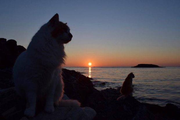 Фото №1 - Открыта вакансия заклинателя котов на острове