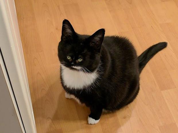 Фото №4 - Коты с крошечными мордами!