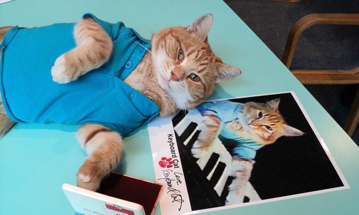 Фото №1 - Умер кот Бенто — главный герой одного из первых роликов-мемов
