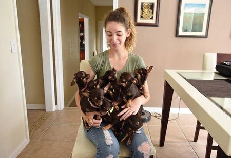 Самую маленькую в мире собаку клонировали 49 раз!