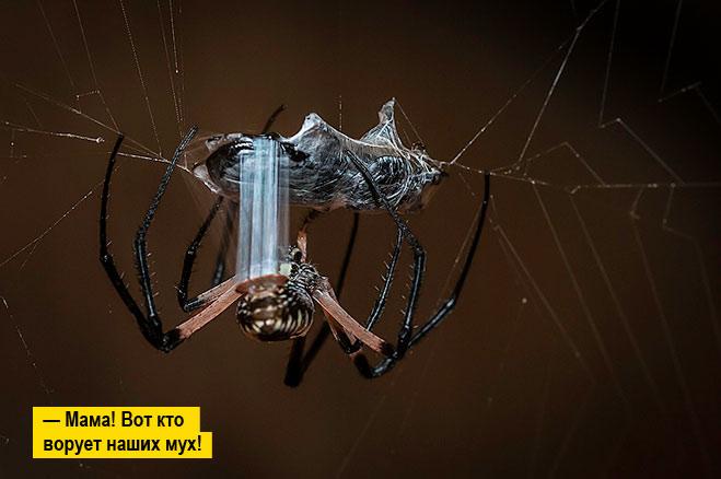 Фото №1 - Удивительные свойства паутины