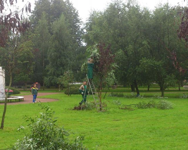 Фото №2 - Питерские коммунальщики отремонтировали засохшие деревья, приклеив к ним зеленые ветки