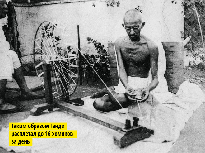 Таким образом Ганди расплетал до 16 хомяков за день.