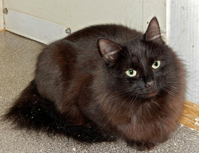 Фото №3 - Котопёс недели: возьми из приюта кота Блэка или собаку Нюсю