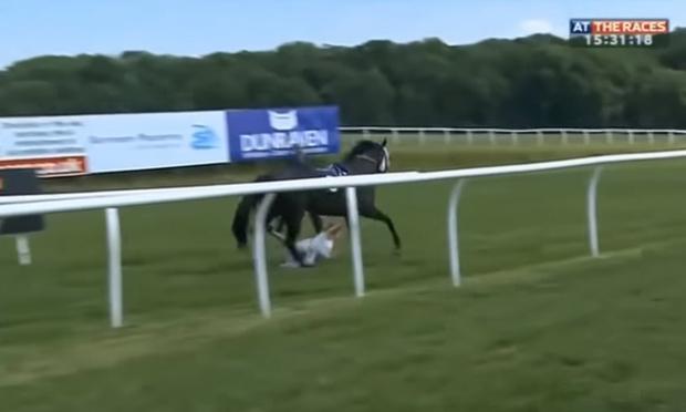 Фото №1 - Конь скинул жокея и пробежался по журналистке! ВИДЕО