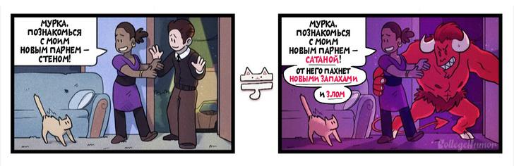 Фото №4 - Что на самом деле думают коты