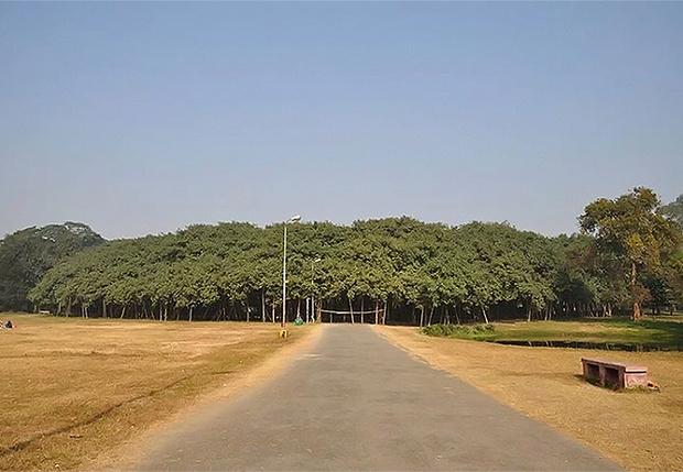 Фото №1 - На вопрос, может ли лес состоять из одного дерева, отвечает Великий баньян
