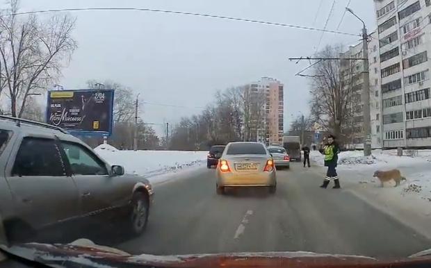 Фото №1 - Человечность дня: в Челябинске полицейский остановил движение, чтобы хромая собака перешла дорогу (видео)