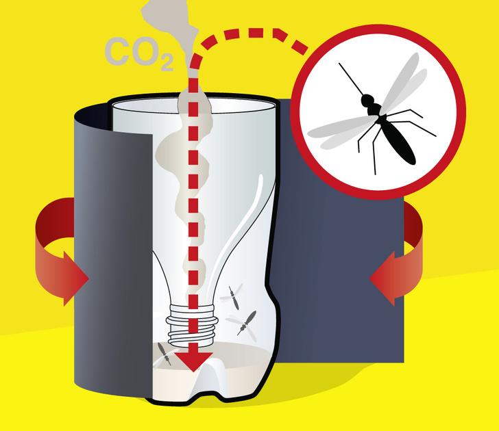 Фото №5 - Как сделать ловушку для комаров