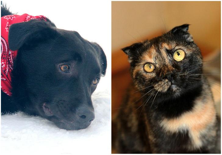 Фото №1 - Котопёс недели: возьми из приюта пса Бари или кошку Нури