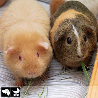 Фото №13 - Как выбрать домашнее животное в зависимости от типа твоего характера и размеров жилплощади