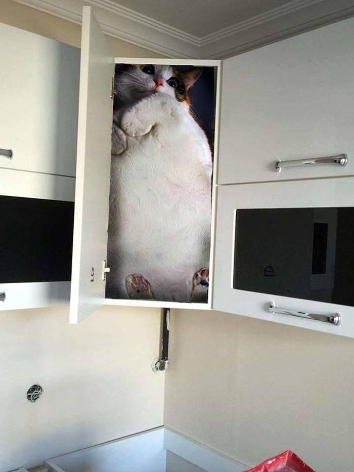 Фото №2 - В Сети набирает популярность флешмоб «Надежный шкафчик на одного»