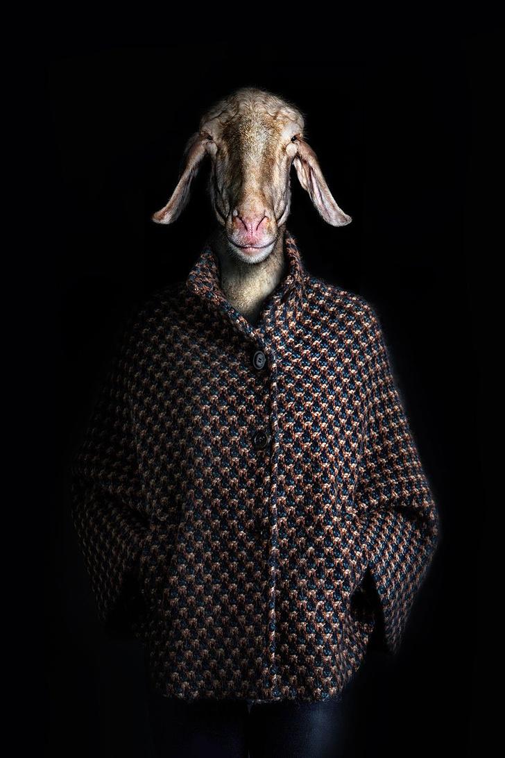 Фото №5 - Так вот как выглядит конь в пальто!