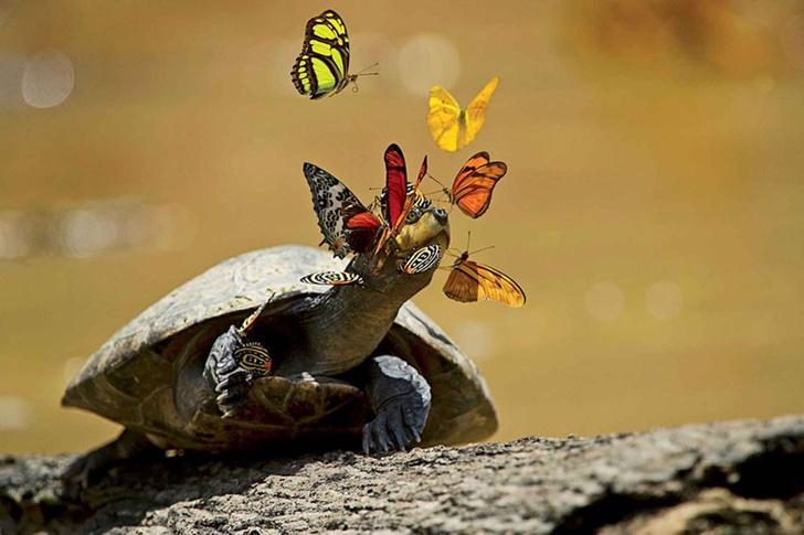 Эквадорские бабочки