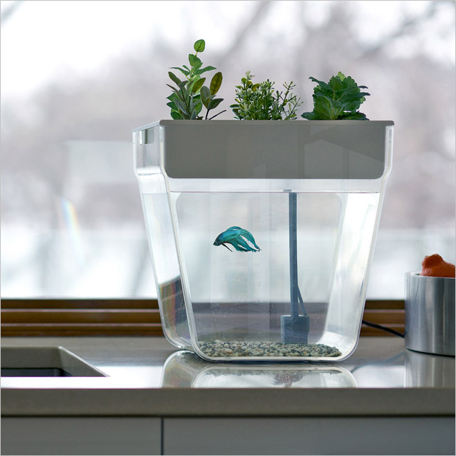 «Акваферма» — аквариум в корнях растений