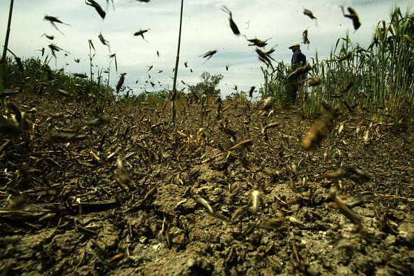 5 самых жутких нашествий насекомых в истории